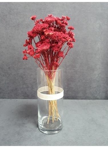 Kuru Çiçek Deposu Kuru Çiçek Şemsiye Otu Demeti 45 Cm Bordo Bordo